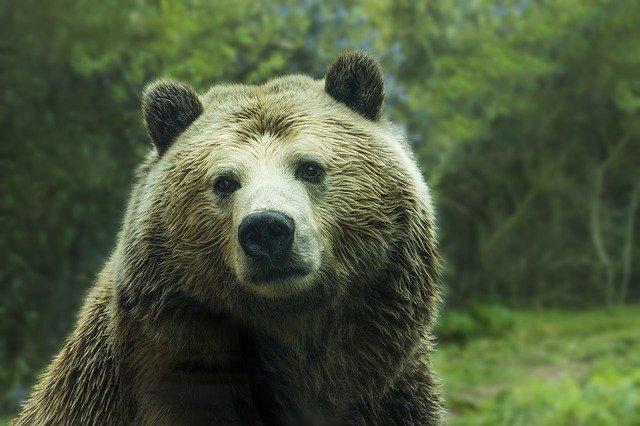bear-1245807_640.jpg.afb56ce333fd5edc2b5629127b1cfbdb.jpg