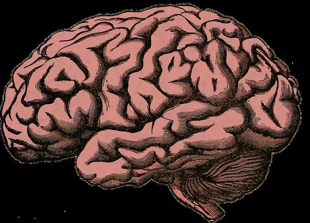 brain-512758_640.png.a0d6ac2f58386def1843d53b77d0a7e1.png