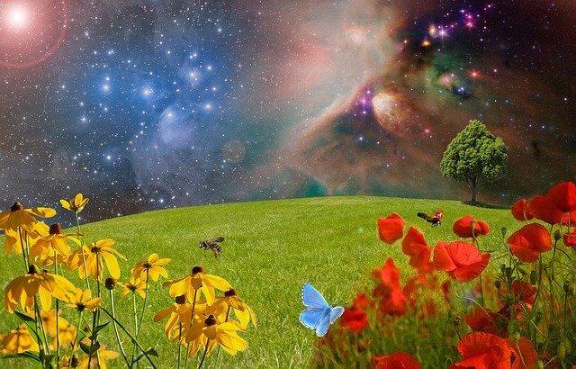 meadow-2401911_640.jpg.b3f8a84012b3d0495afdc53946842f65.jpg